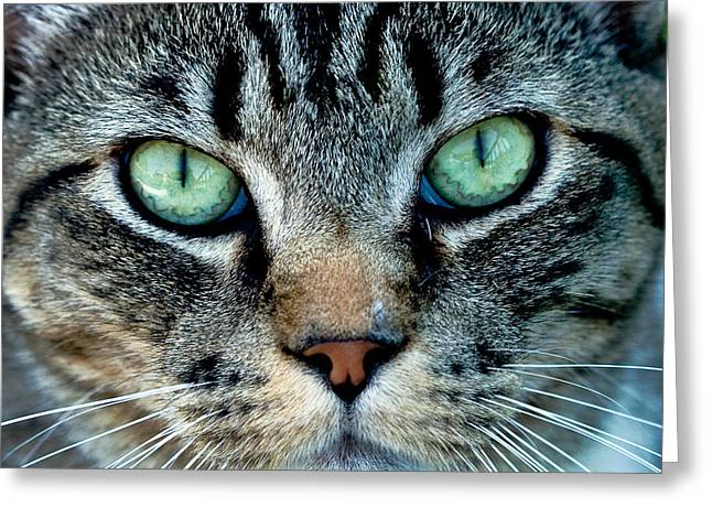 Jean Noren Greeting Cards - Cat face Greeting Card by Jean Noren