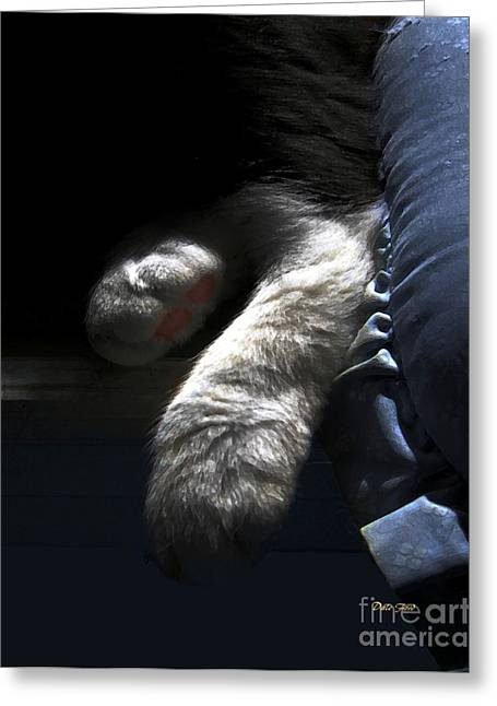 Photos Of Cats Digital Greeting Cards - Cat Feet Greeting Card by Dale   Ford