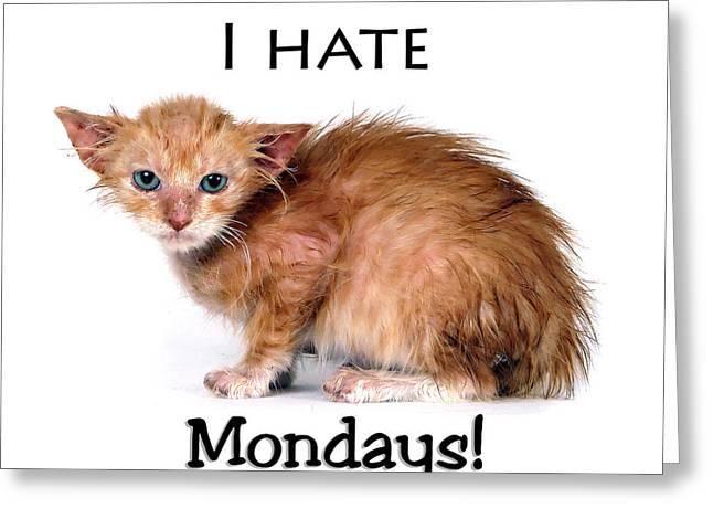 Myeress Greeting Cards - Cat Hates Monday Greeting Card by Joe Myeress