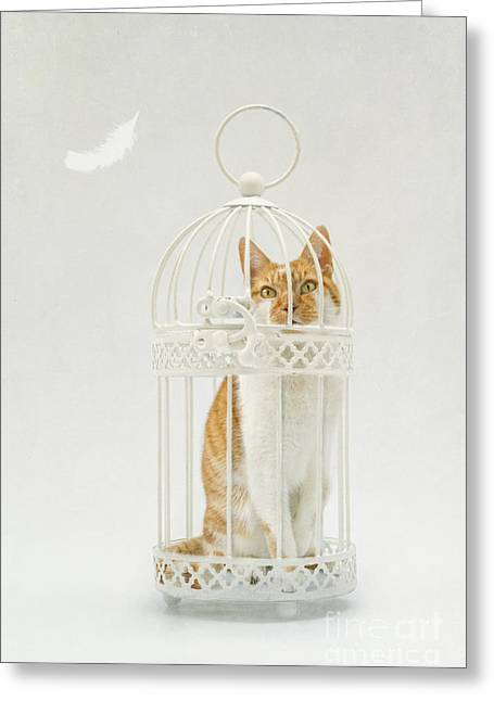 Cat In A Birdcage Greeting Card by Catherine MacBride