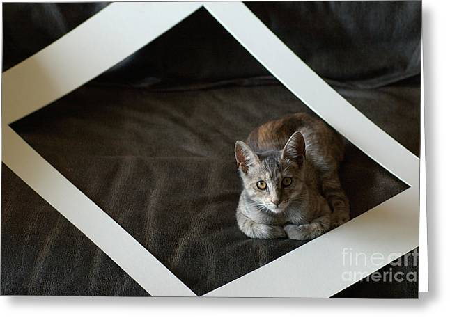Frame House Greeting Cards - Cat in a Frame Greeting Card by Micah May