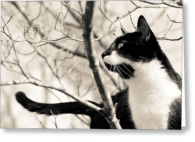 Male Framed Prints Greeting Cards - Cat in a Tree in Black and White Greeting Card by Lori Coleman