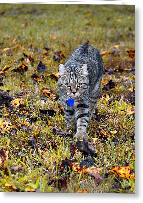 Cat In Autumn Greeting Card by Susan Leggett