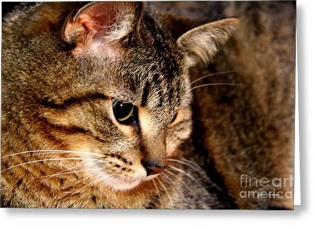 House Pet Greeting Cards - Cat in Deep thought  Greeting Card by Yumi Johnson