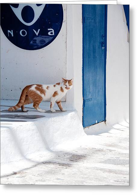 Thin Greeting Cards - Cat in Mykonos Greeting Card by Laura Melis