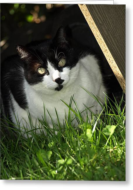 Debi Ling Greeting Cards - Cat in the grass Greeting Card by Debi Ling