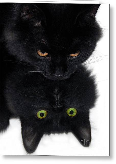 Cat Reflection Greeting Cards - Cat in the Mirror Greeting Card by Graham Taylor