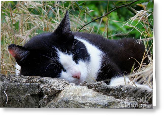 Lainie Wrightson Greeting Cards - Cat Napping Greeting Card by Lainie Wrightson