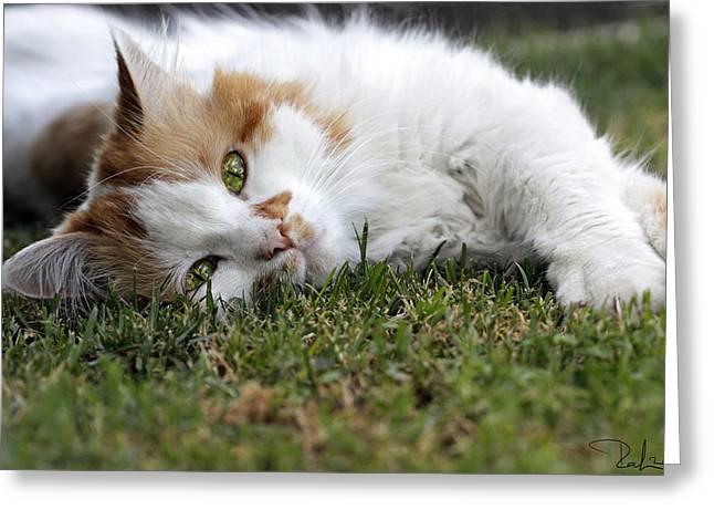Cat On The Grass Greeting Card by Raffaella Lunelli