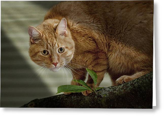 Randy Greeting Cards - Cat out on a Limb Greeting Card by Randall Nyhof