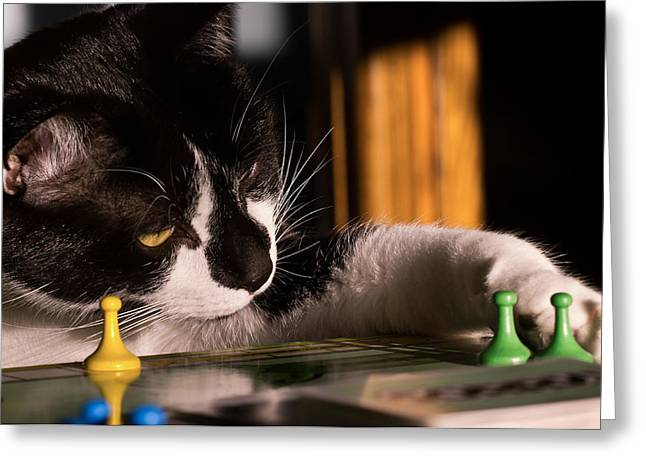 Game Piece Greeting Cards - Cat Playing a Game Greeting Card by Lori Coleman