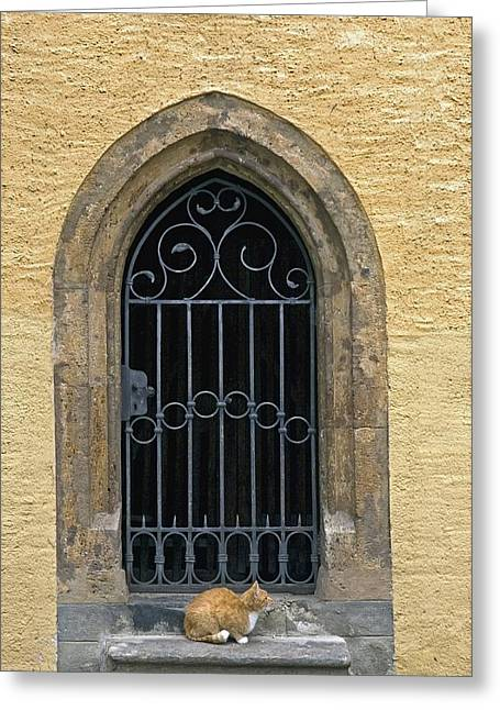 Grate Greeting Cards - Cat Sitting On Window Sill At Millstatt Greeting Card by Axiom Photographic