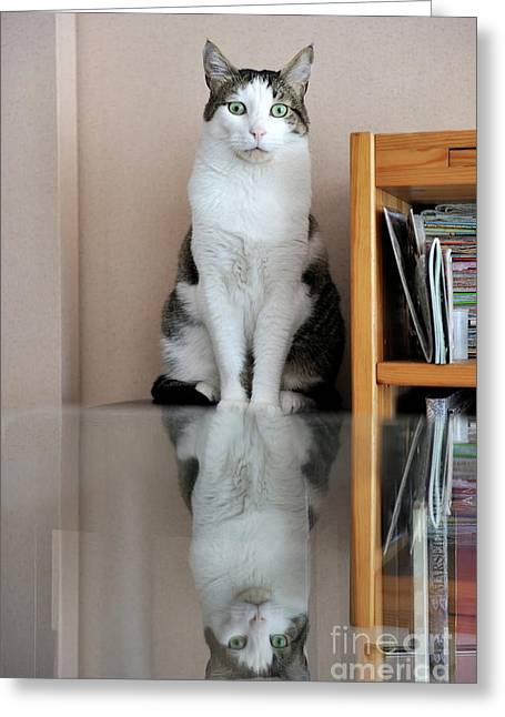 Glass Table Reflection Greeting Cards - Cat standing on chair Greeting Card by Sami Sarkis