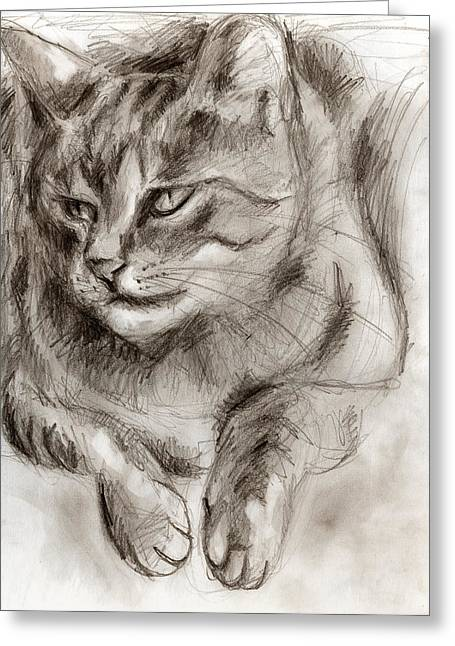 Cats Drawings Drawings Greeting Cards - Cat study drawing no one Greeting Card by Hiroko Sakai