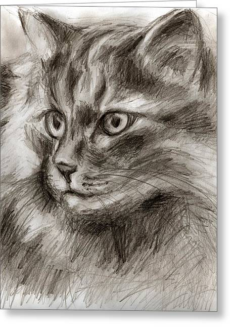 Cats Drawings Drawings Greeting Cards - Cat study drawing no two Greeting Card by Hiroko Sakai