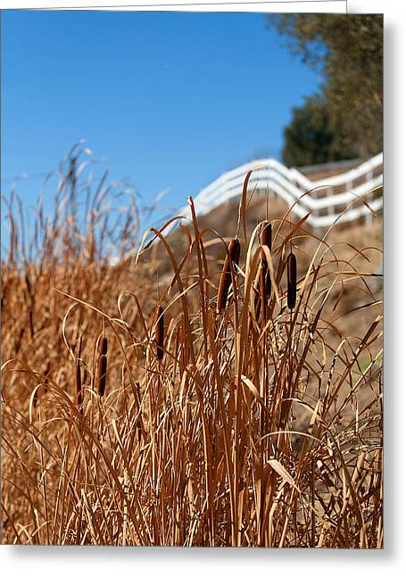 Cat Tail Greeting Cards - Cat Tails and Galloping Fence Greeting Card by Peter Tellone