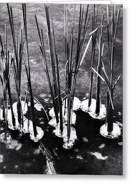 Cat-tails In Ice Greeting Card by Todd Sherlock