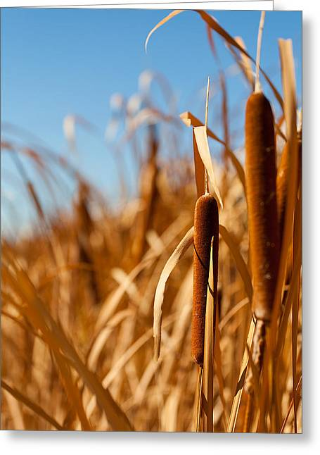 Cat Tail Greeting Cards - Cat Tails Greeting Card by Peter Tellone