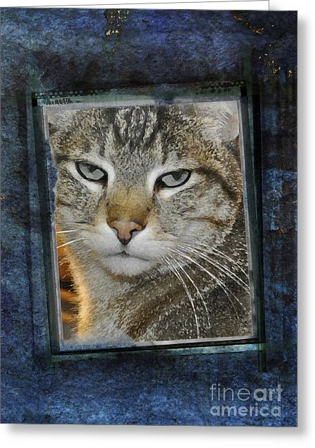 Cat Through A Tiny Window Greeting Card by Mary Machare