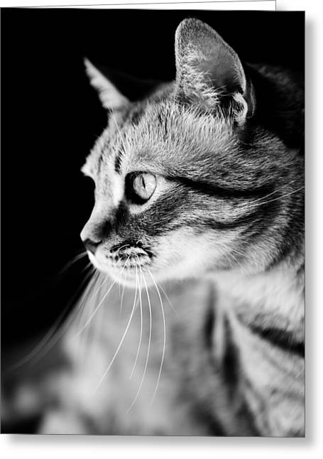 Mustache Greeting Cards - Cat Waiting The Right Moment Greeting Card by Marc Garrido