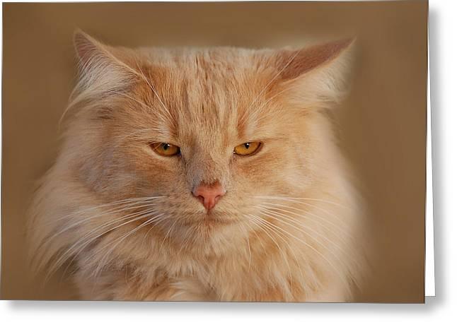 cat Greeting Card by Waldek Dabrowski