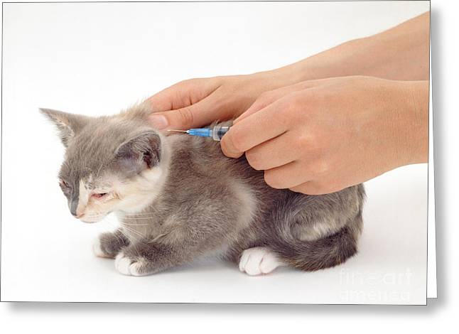 Vet Photographs Greeting Cards - Cat With Flu Symptoms Getting Greeting Card by Jane Burton