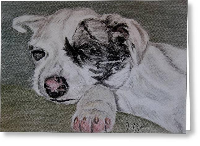Catahoula Greeting Cards - Catahoula Pup  Greeting Card by Joan Pye