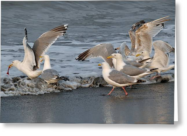 Seagul Greeting Cards - Catch Me If You Can  Greeting Card by Debra  Miller