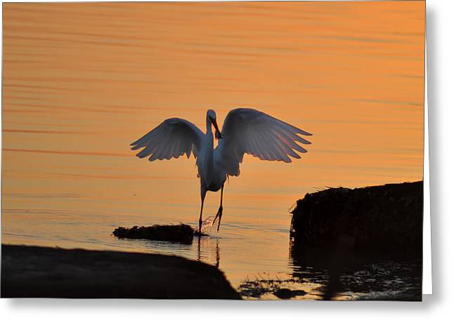 St Petersburg Florida Greeting Cards - Catch of the Day Greeting Card by Bill Cannon