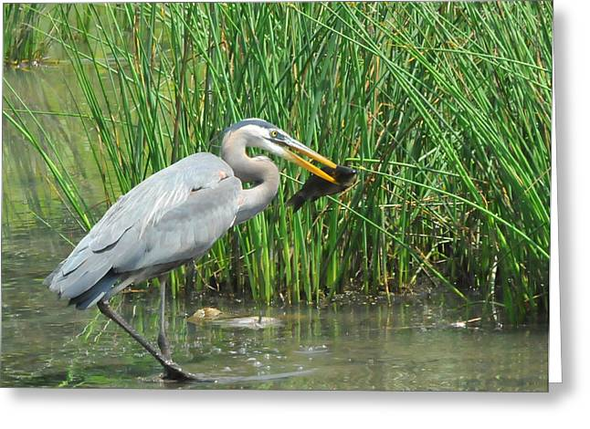 Muddy Waters Greeting Cards - Catch of the Day Greeting Card by Paul Ward