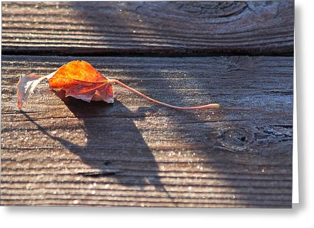 Fallen Leaf Greeting Cards - Catching the Light Greeting Card by Lauri Novak