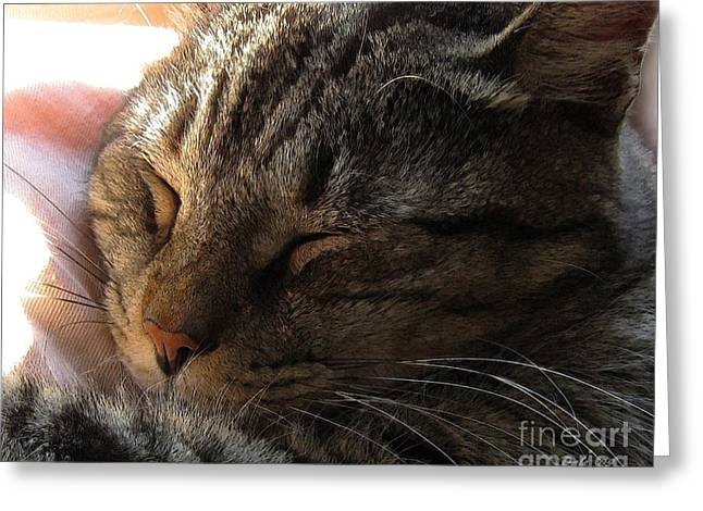 Photo Of Cat Greeting Cards - Catnap Greeting Card by Dale   Ford