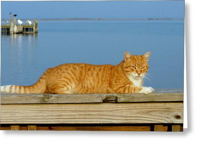 Litter Mates Photographs Greeting Cards - Cats 29 Greeting Card by Joyce StJames