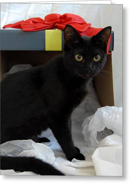 Litter Mates Greeting Cards - Cats 41 Greeting Card by Joyce StJames