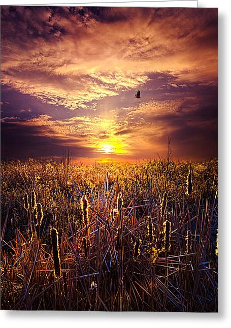 Geographic Greeting Cards - Cats and Tails Greeting Card by Phil Koch
