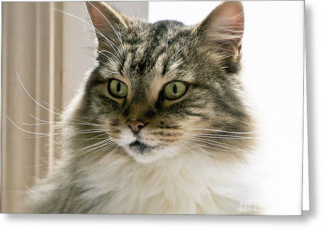 Family Pet Greeting Cards - Cats Are Magical Greeting Card by Gwyn Newcombe