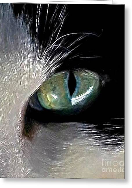 Photos Of Cats Digital Greeting Cards - Cats Eye Greeting Card by Dale   Ford