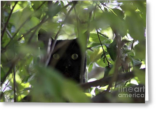Oregon Greeting Cards - Cats Eyes Greeting Card by Mrsroadrunner Photography