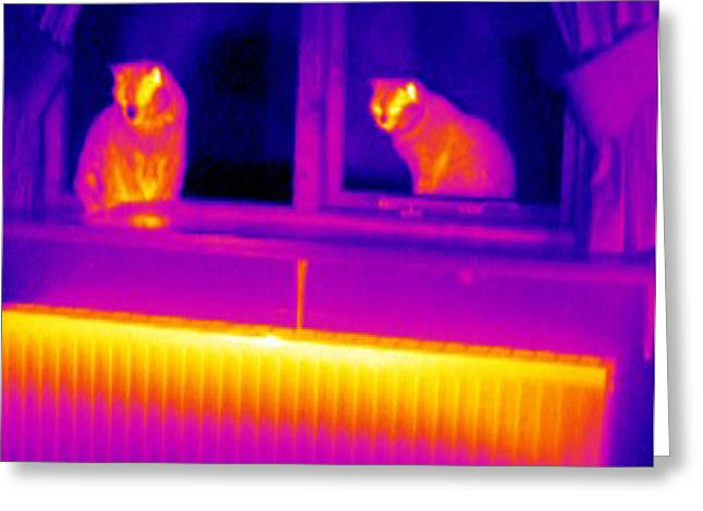 Thermograph Greeting Cards - Cats On Window Sill Greeting Card by Tony Mcconnell