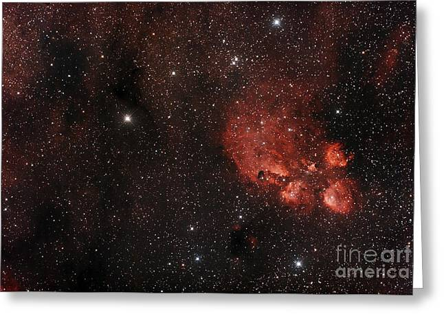 Emission Nebula Greeting Cards - Cats Paw Nebula In Scorpius Greeting Card by Philip Hart
