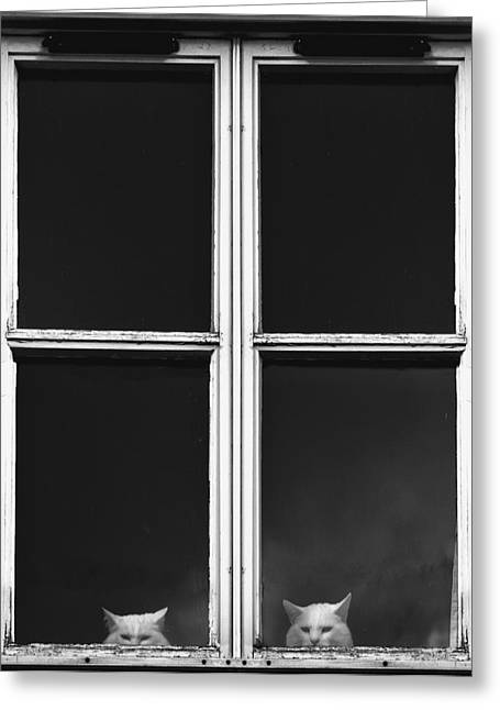 Side At Home Photographs Greeting Cards - Cats Peeking Out the Window Greeting Card by John Short