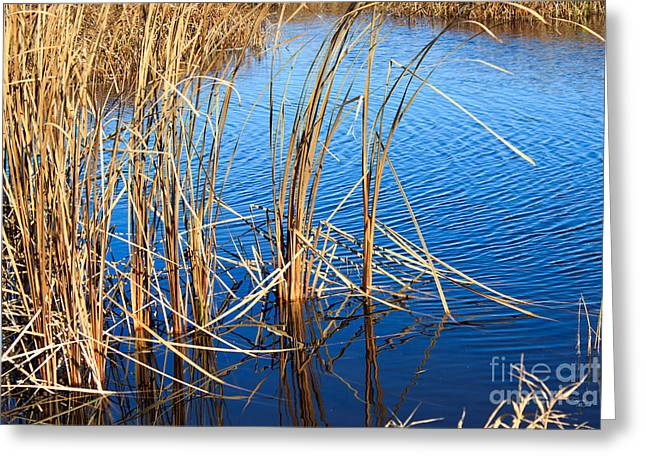 Park Scene Mixed Media Greeting Cards - Cattail Reeds Greeting Card by Ms Judi