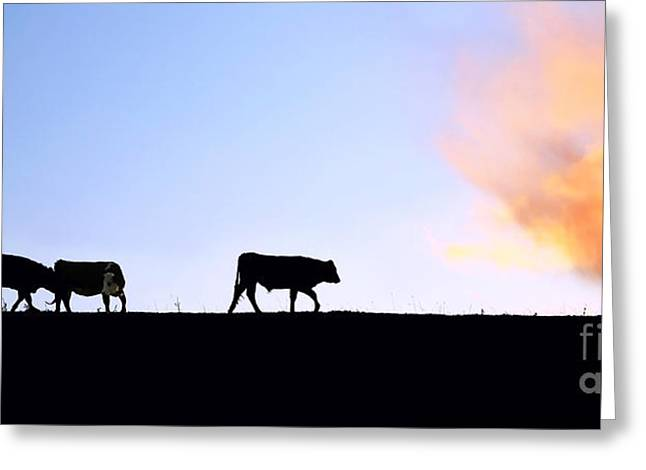 Herd Bound Greeting Cards - Cattle At Dusk Greeting Card by Susan Wall