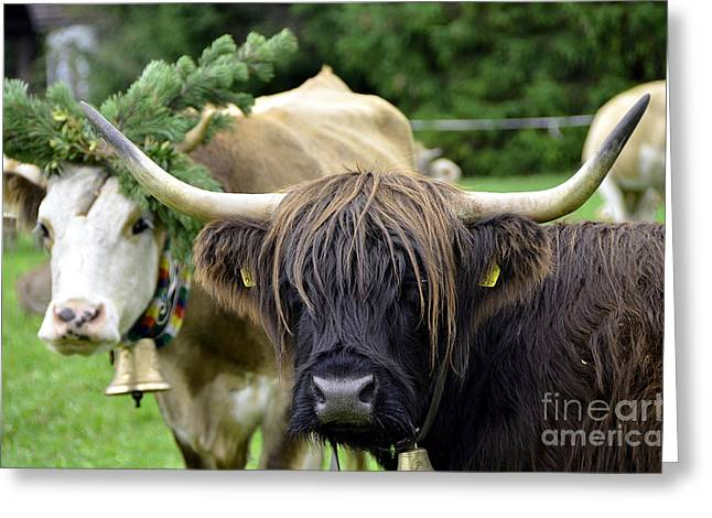Traditionell Greeting Cards - Cattle Drive in Alps Greeting Card by Elzbieta Fazel