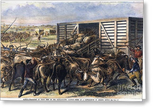 Engraving Greeting Cards - Cattle Drovers Herding Greeting Card by Granger