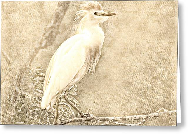 Cattle Egret Greeting Cards - Cattle Egret Mono Greeting Card by Betty LaRue