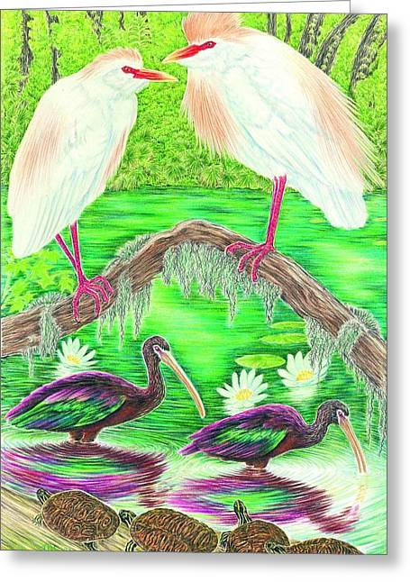 Lilly Pad Greeting Cards - Cattle Egrets with Ibis Greeting Card by Tim McCarthy