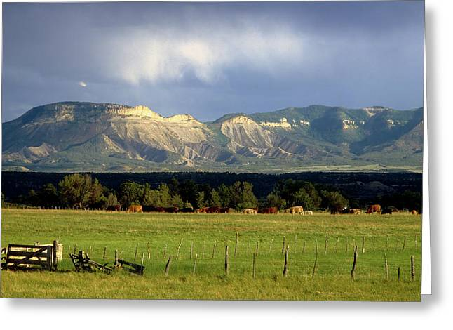 Color_image Greeting Cards - Cattle on Pasture Near Mesa Verde Greeting Card by John Brink
