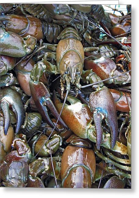 Boiled Crawfish Greeting Cards - Caught Crayfish Greeting Card by Bjorn Svensson