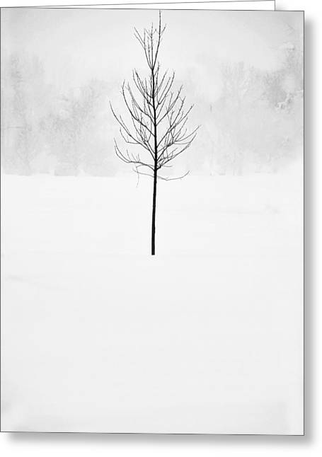 Winter Photos Greeting Cards - Caught in the Blizzard Greeting Card by Andrew Soundarajan